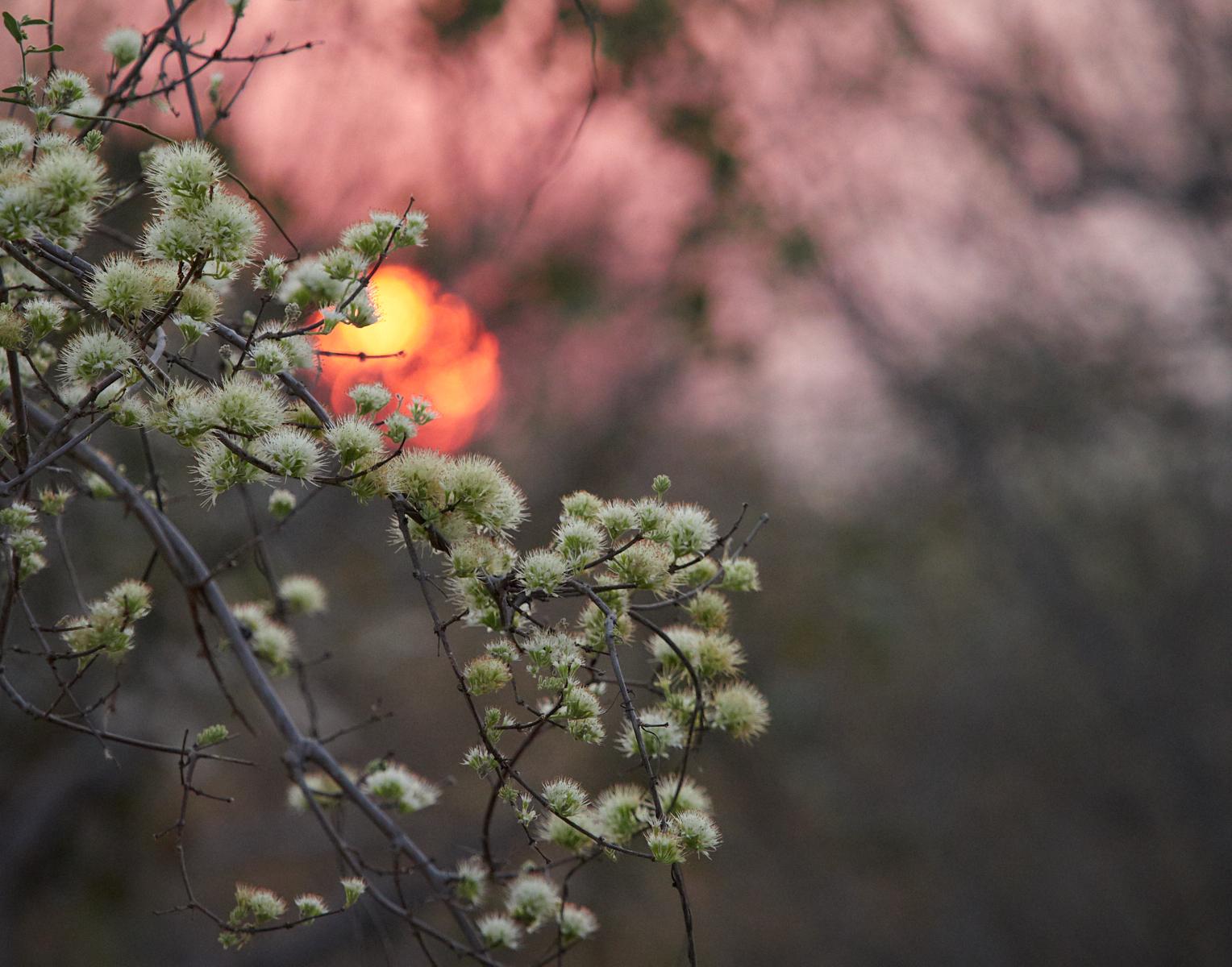 Confetti bush sunset