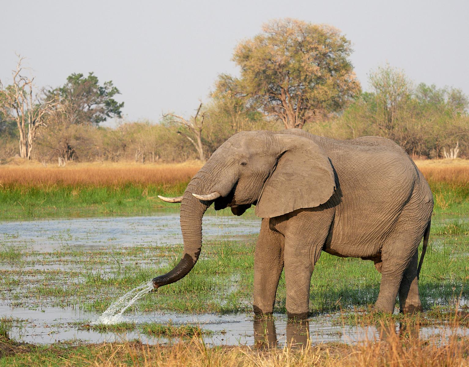 Elephant bathing 1600x1200 sRGB.jpg