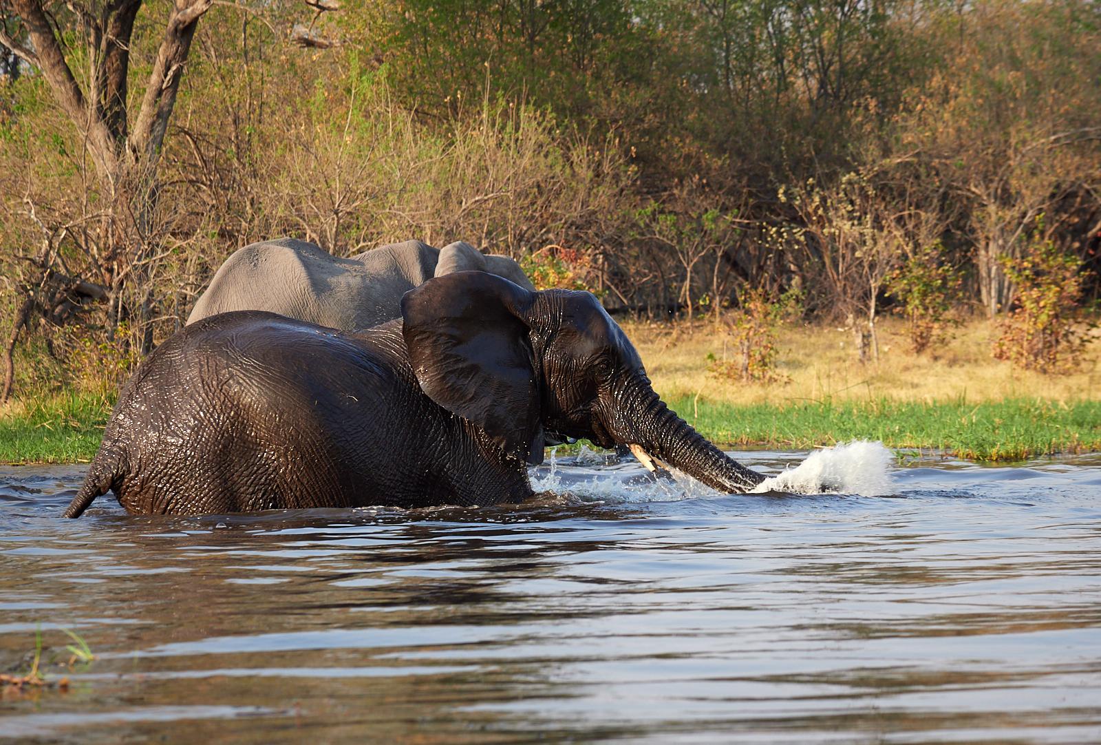 Elephant crossing 1600x1200 sRGB.jpg