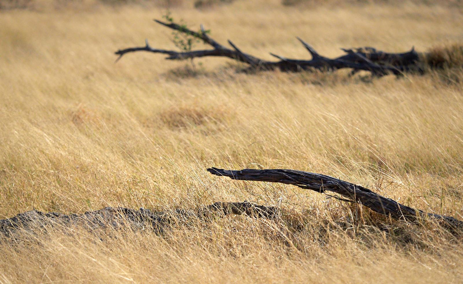 Moremi grasses and logs 1600x1200 sRGB.jpg