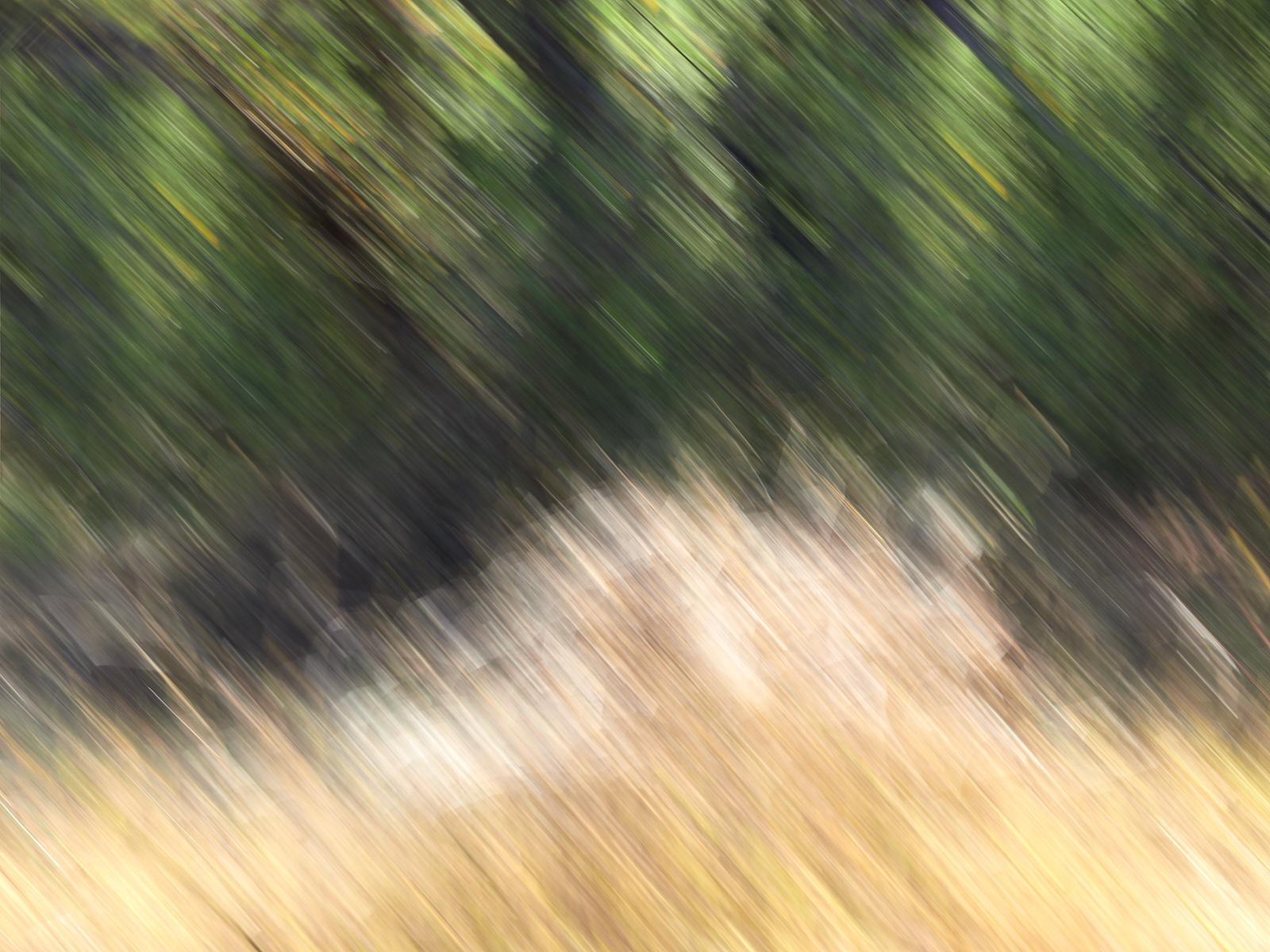 Moremi impressions 2 1600x1200 sRGB.jpg