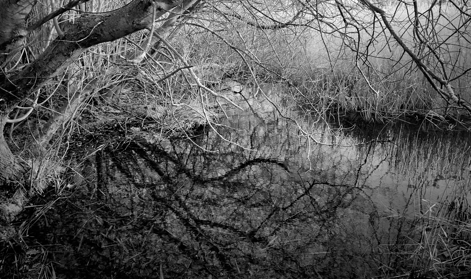 Branch patterns over water