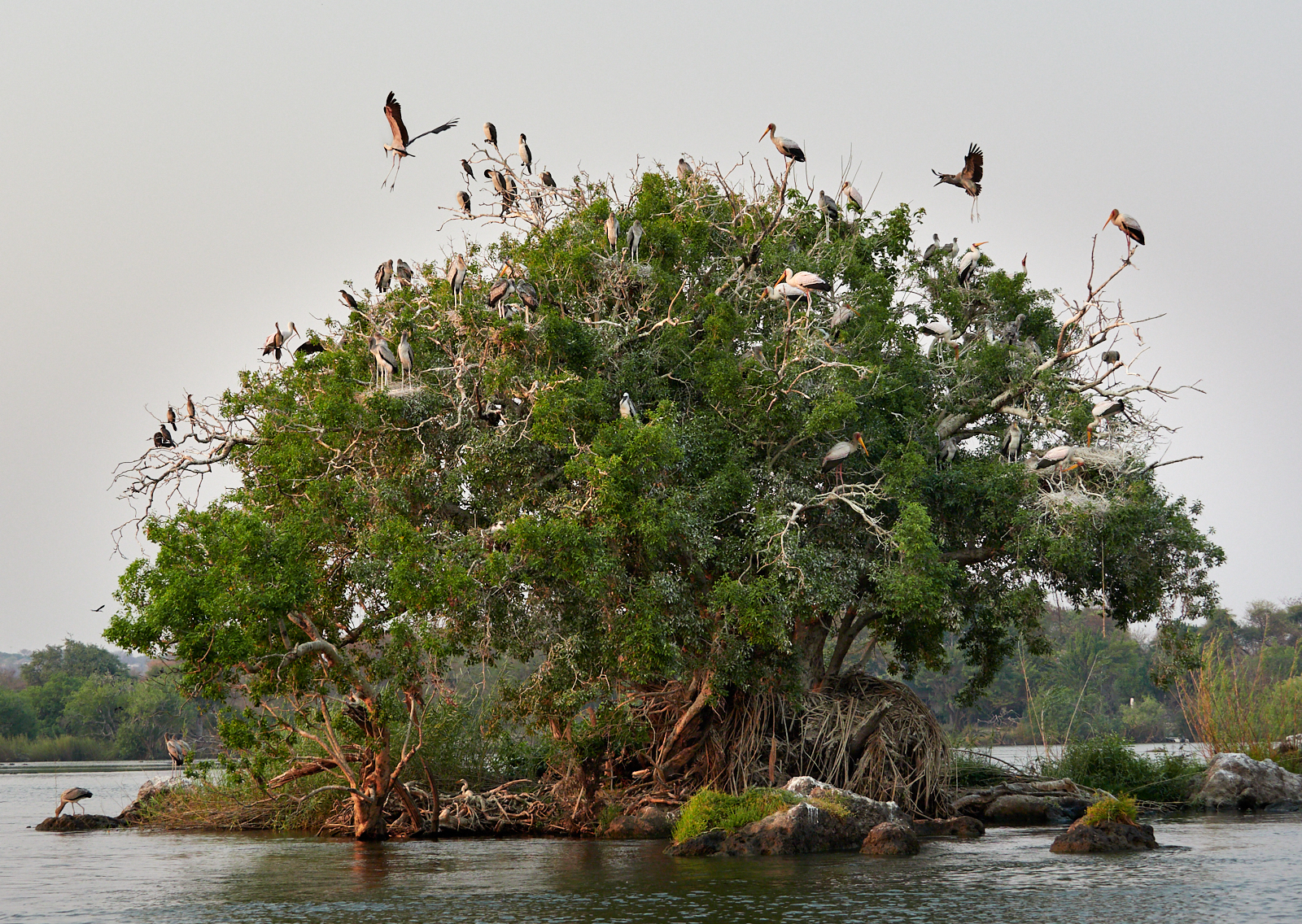 Nesting tree 1600x1200 sRGB.jpg