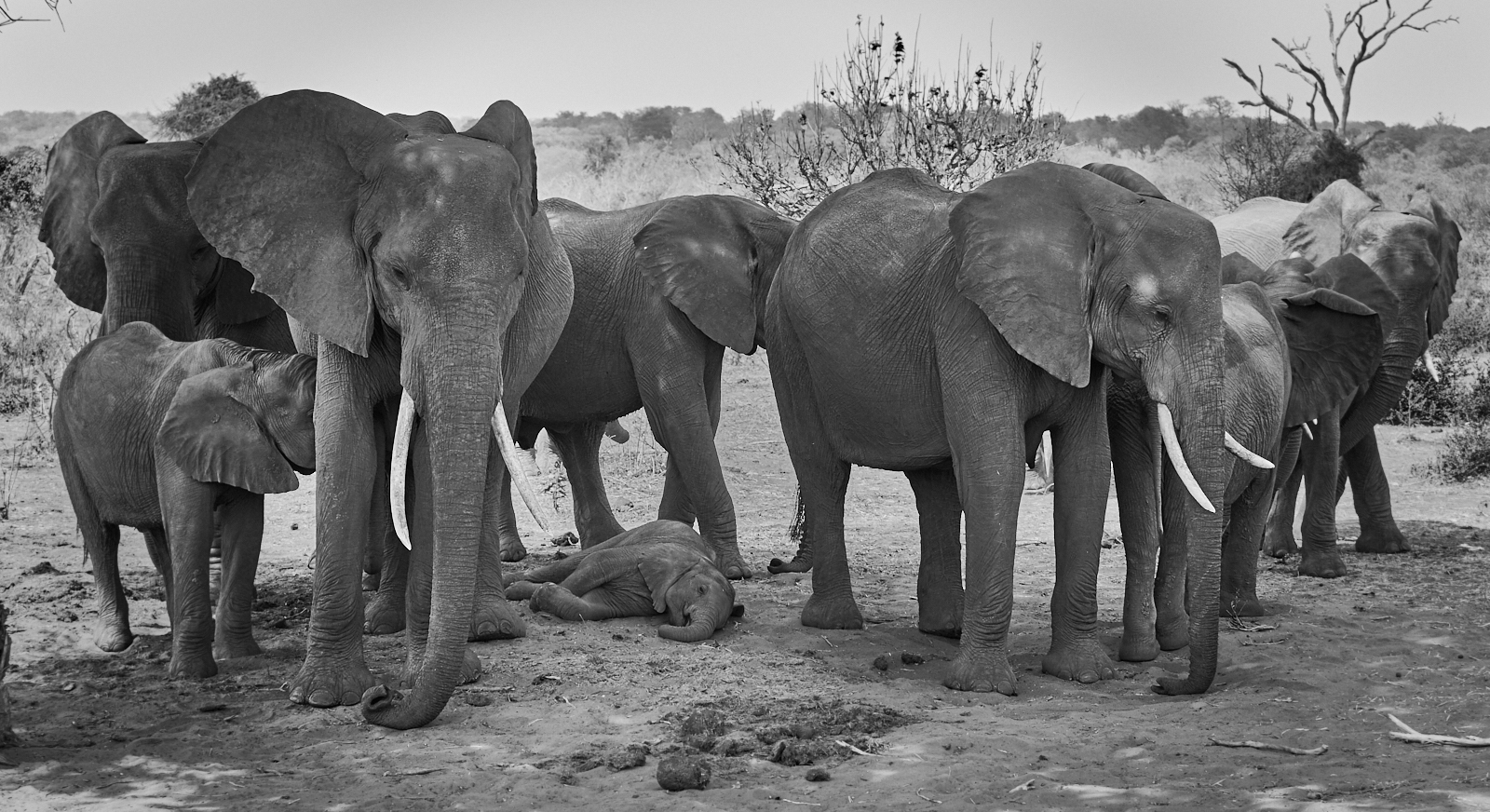 Protecting elephants 1600x1200 sRGB.jpg