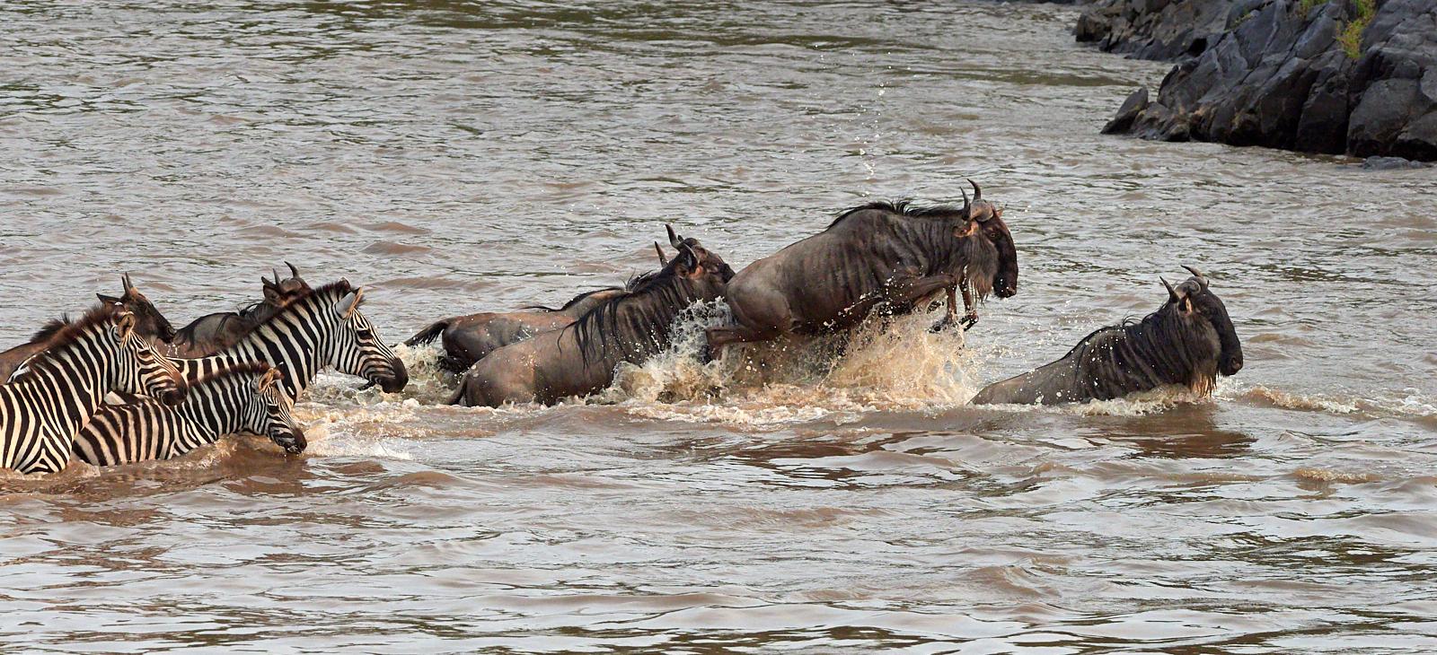 Crossing at a canter, Mara River