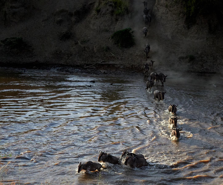 Early wildebeest crossing 1600x1200 sRGB 1.jpg