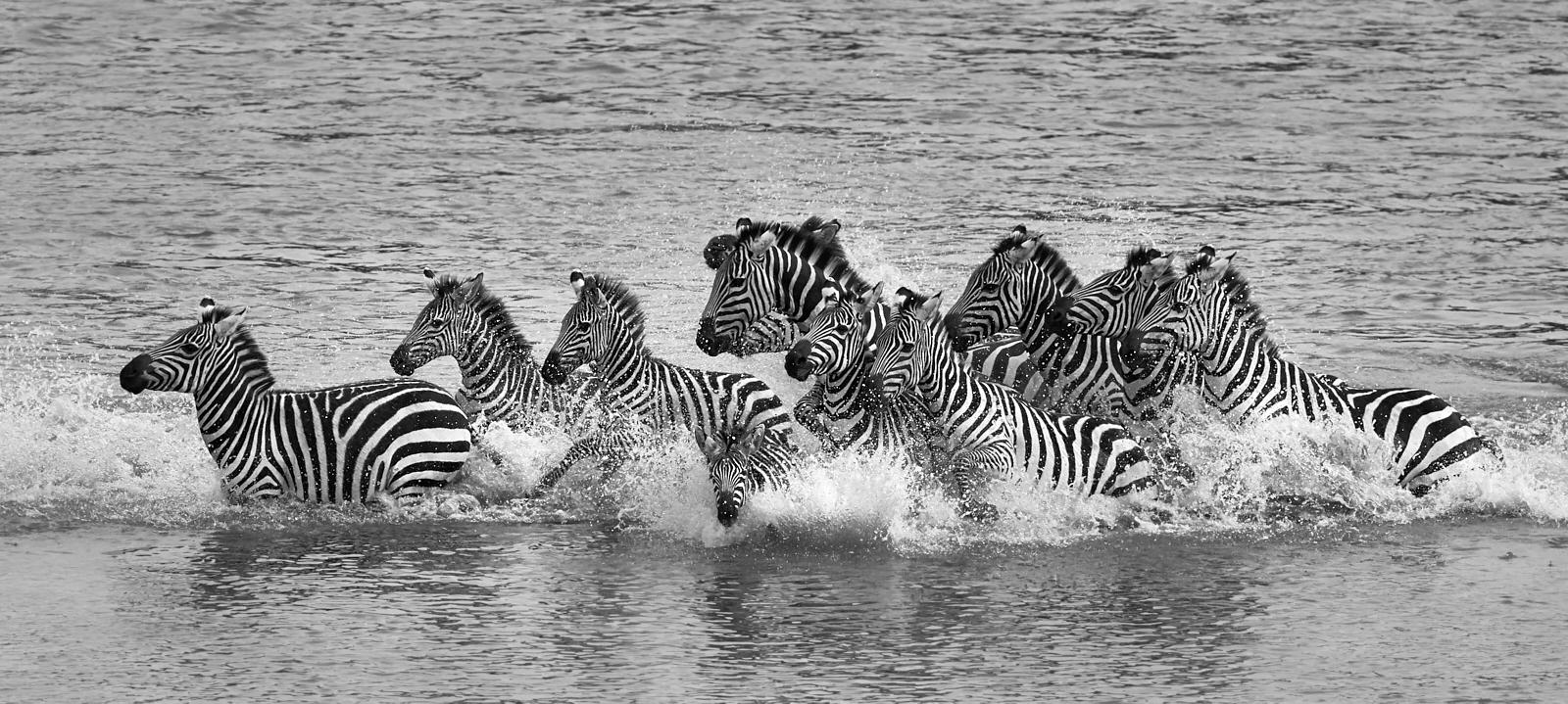Running from crocodile mono 1600x1200 sRGB.jpg