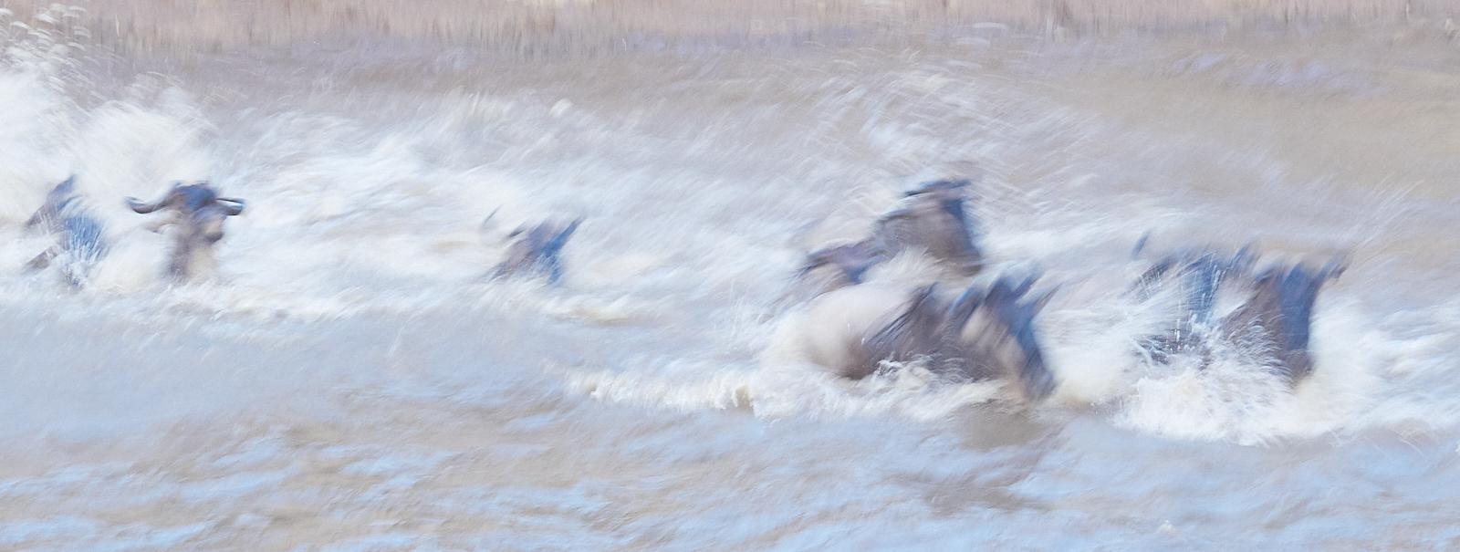 Wildebeest crossing slow shutter 1600x1200 sRGB.jpg