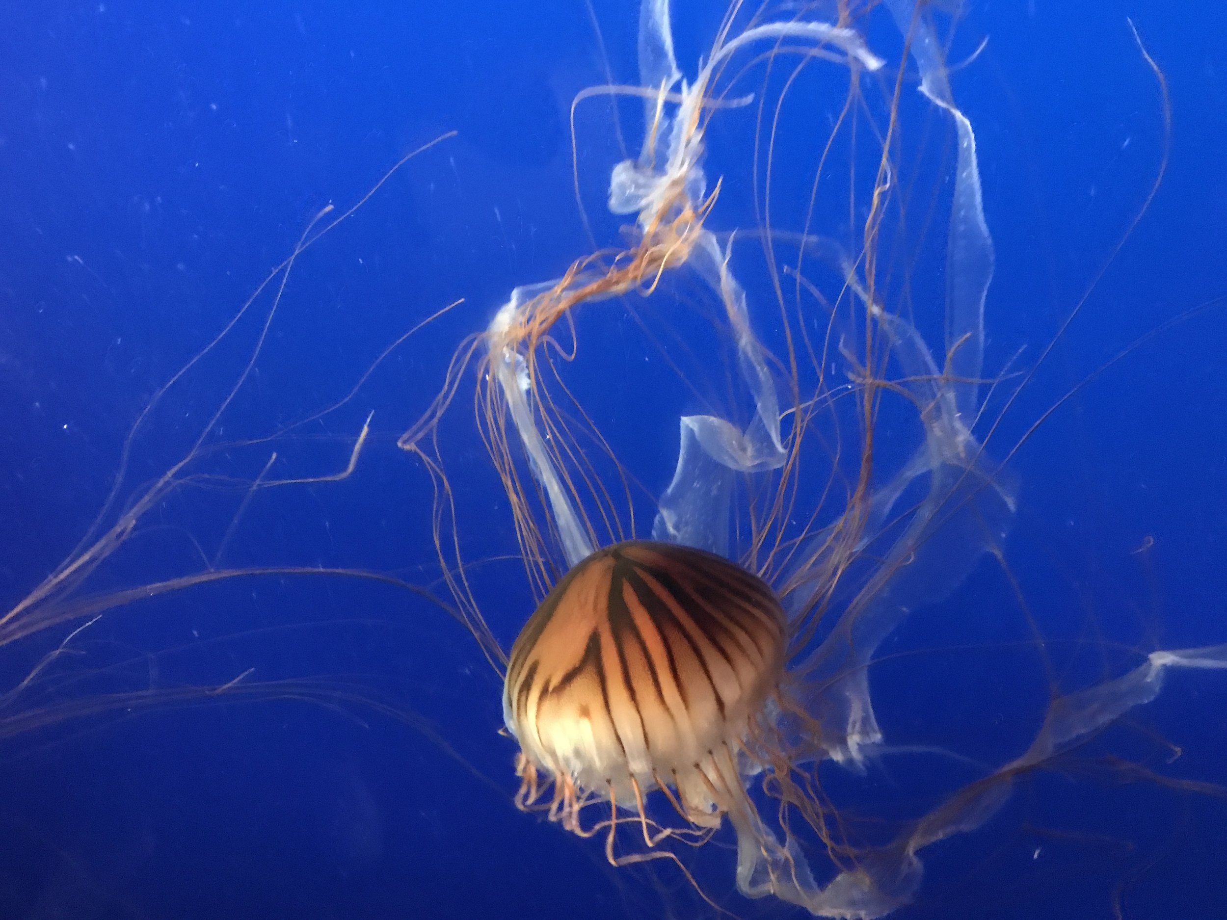 Jelly Fish - The most beautiful were the jelly fish