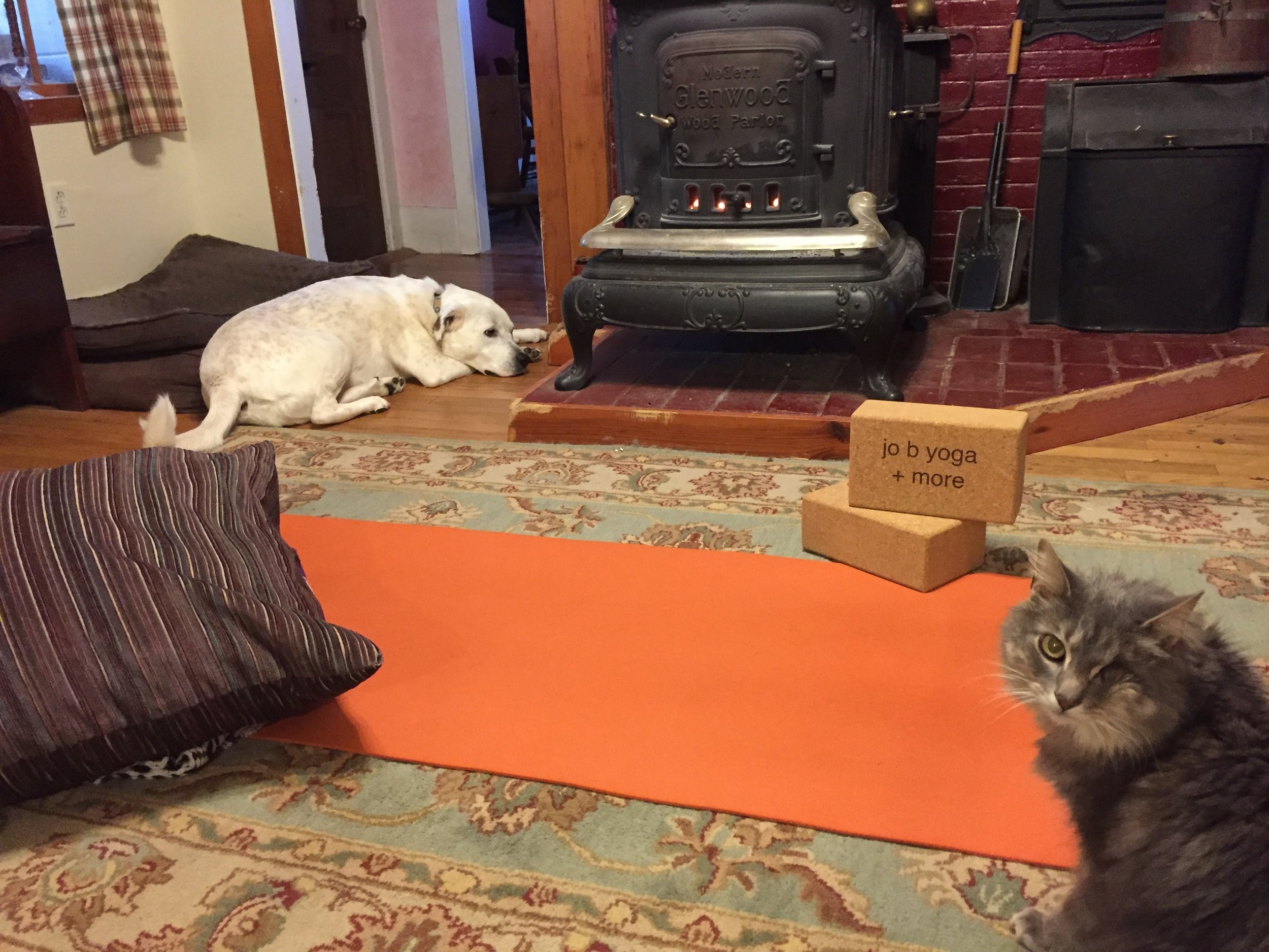 Mat, props, fire in the woodstove, frankincense oil in the water pot,yoga buddies ... time for home practice ;)