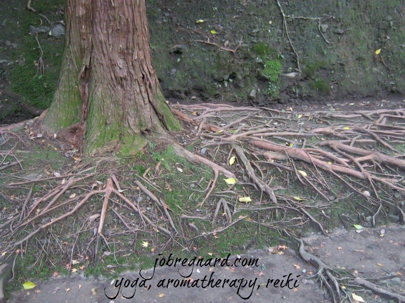 Tree and greenery courtesy of Kyoto, Japan