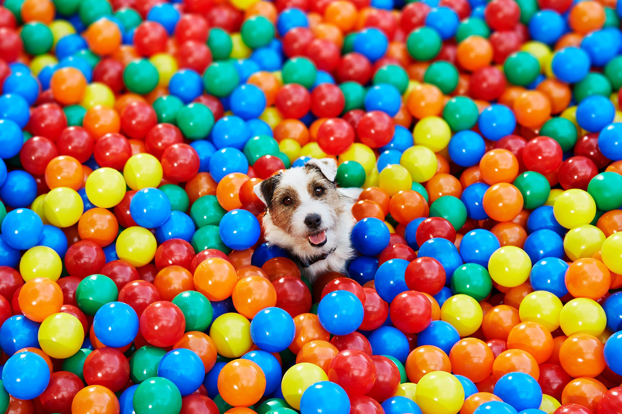 DOG+DEEPLINK+IMAGE (1).jpg