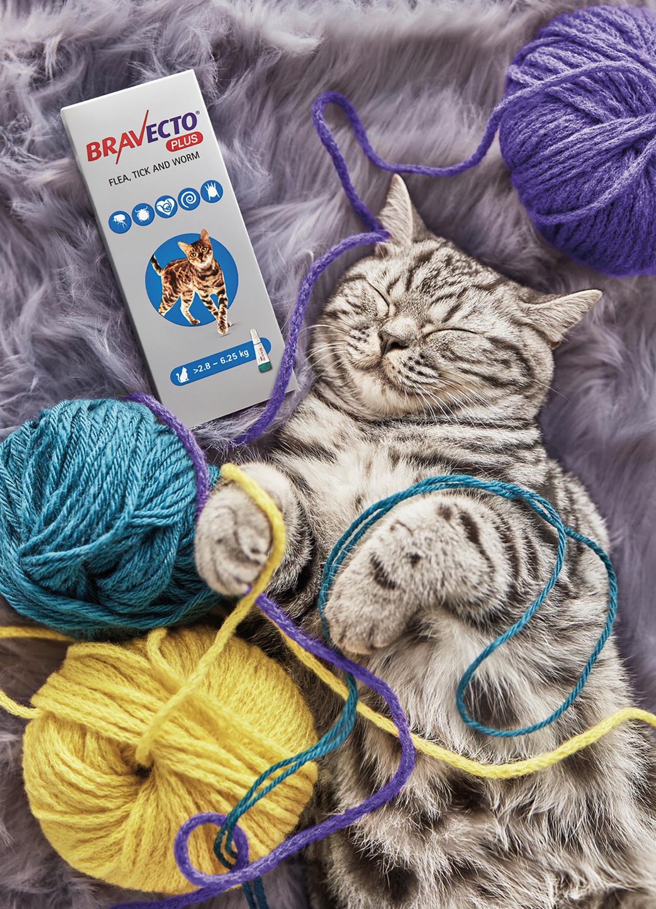 CAT TWO.jpg