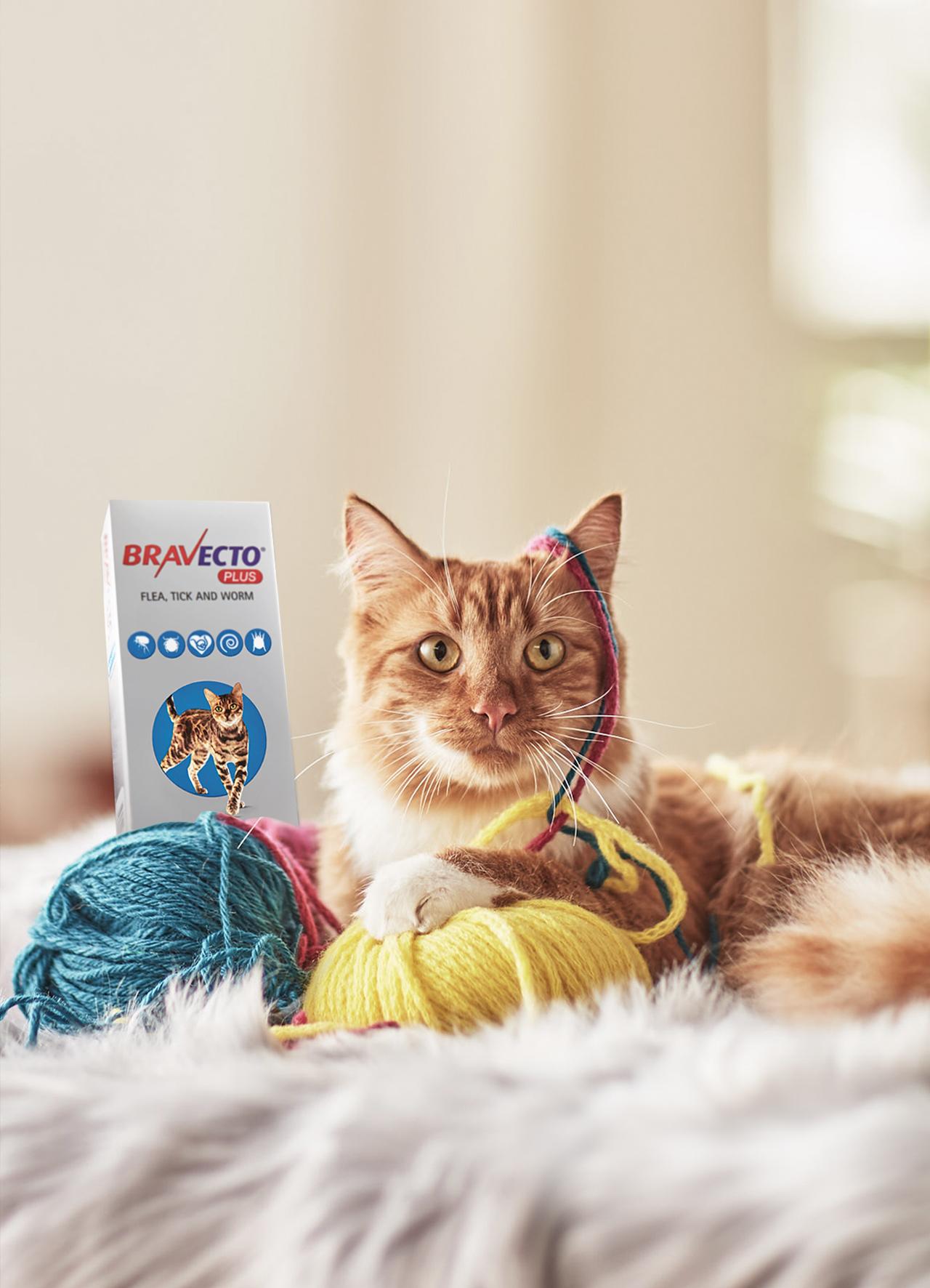 CAT ONE.jpg
