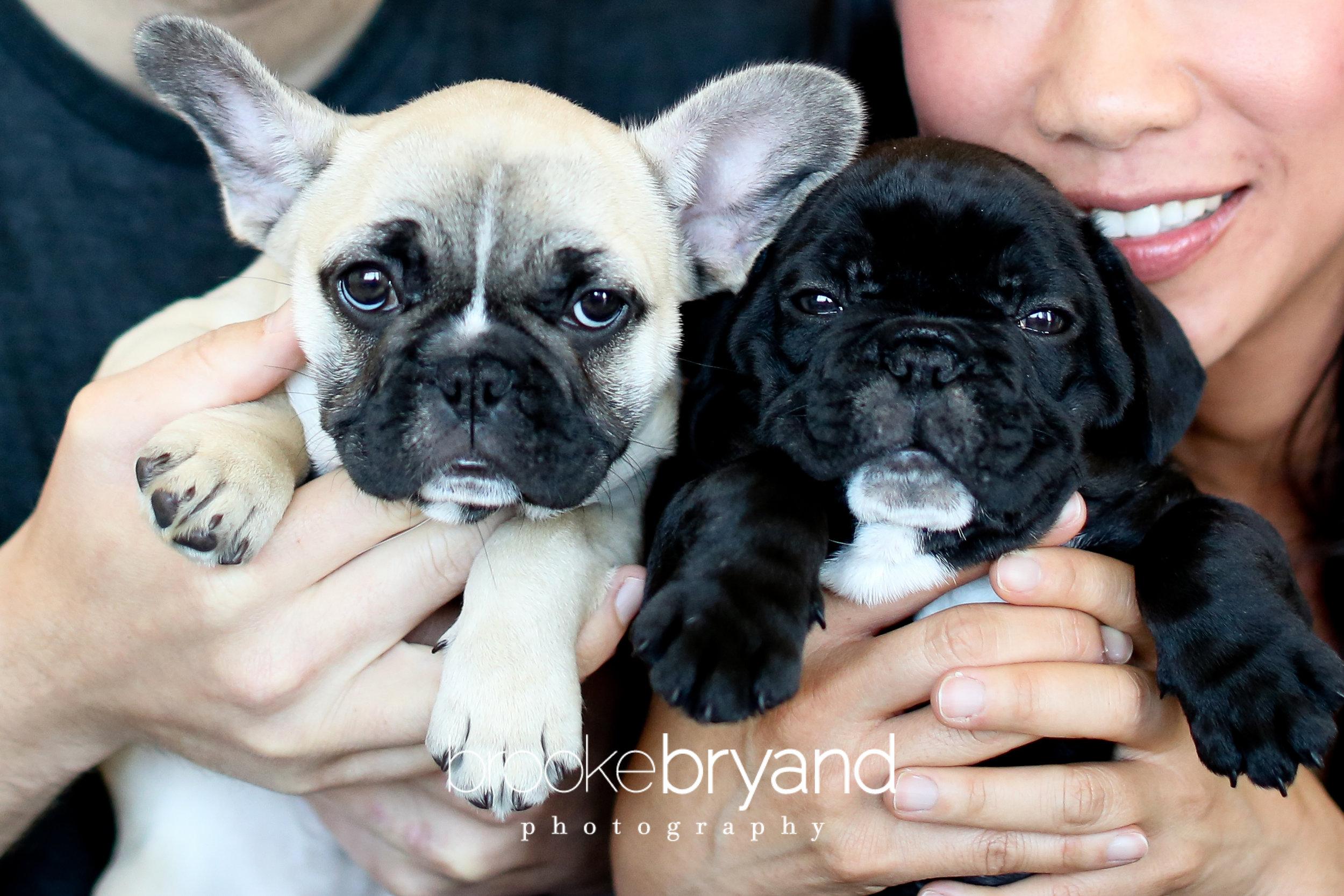 Brooke-Bryand-Photography-San-Francisco-Pet-Photographer-IMG_0043.jpg