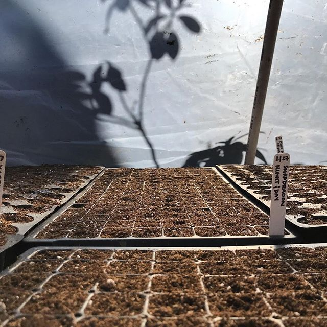 Warm little #seedstarting hideaway with @kamayanfarm 💚🌱