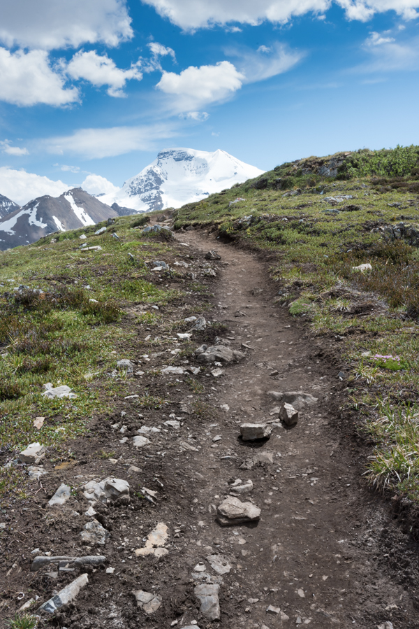 Trail Through the Tundra on Wilcox Pass