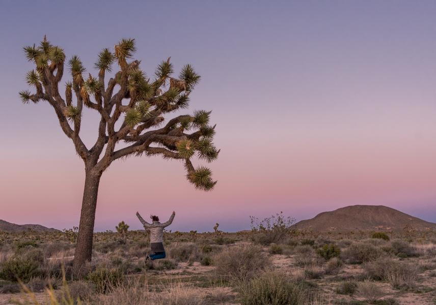 Woman Leaps Under Large Joshua Tree