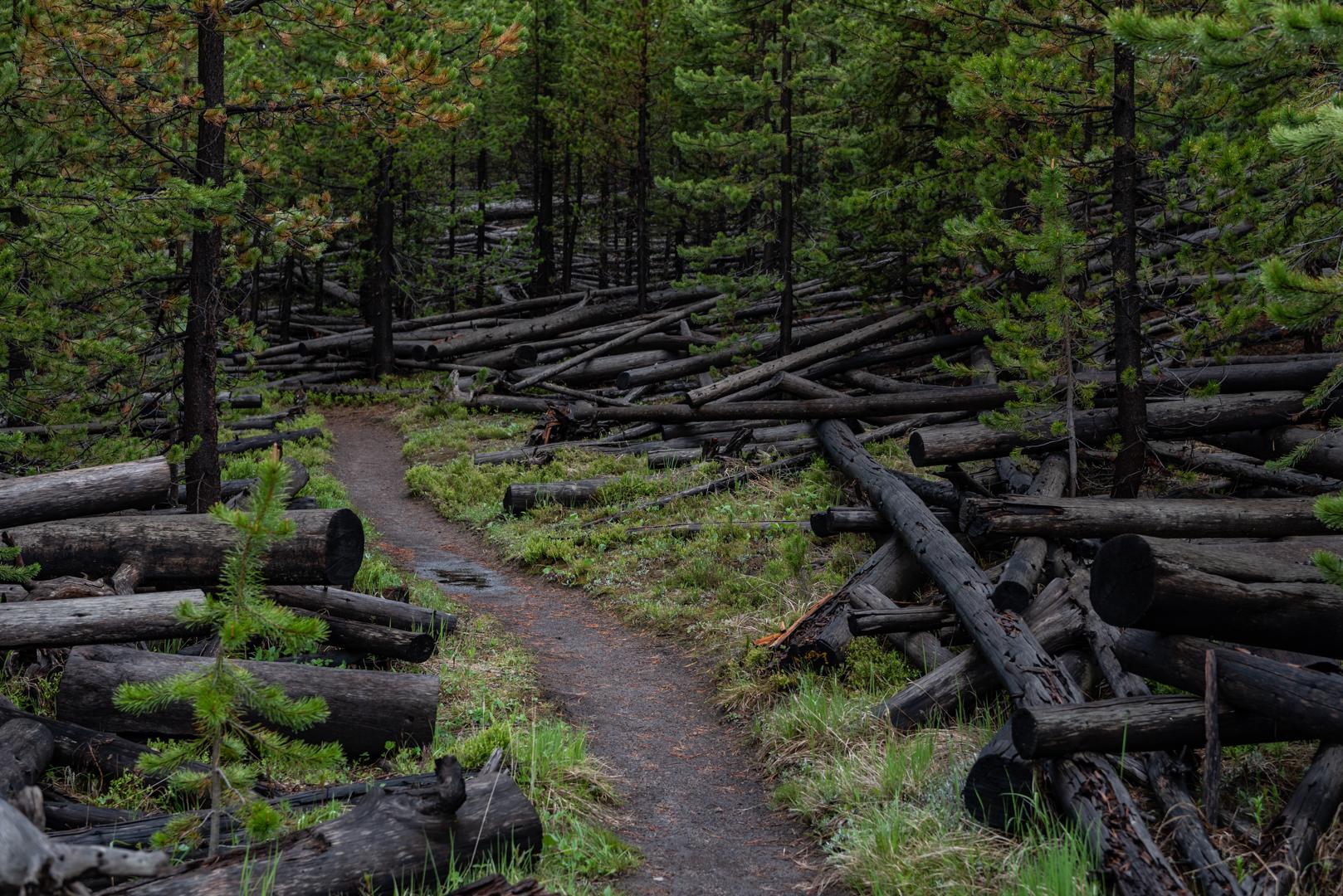 Trail Through Fallen Burned Trees