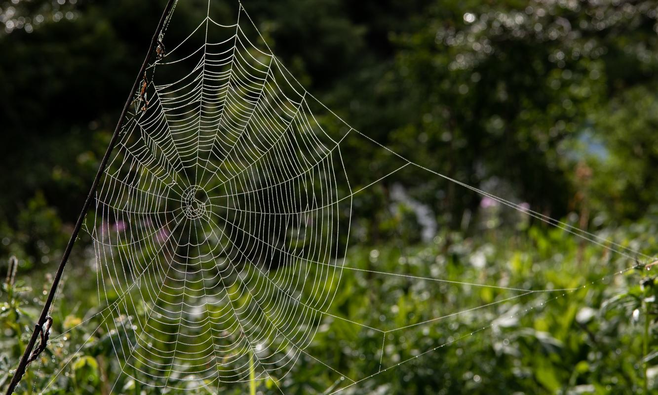 Thick Spider Web Glistens