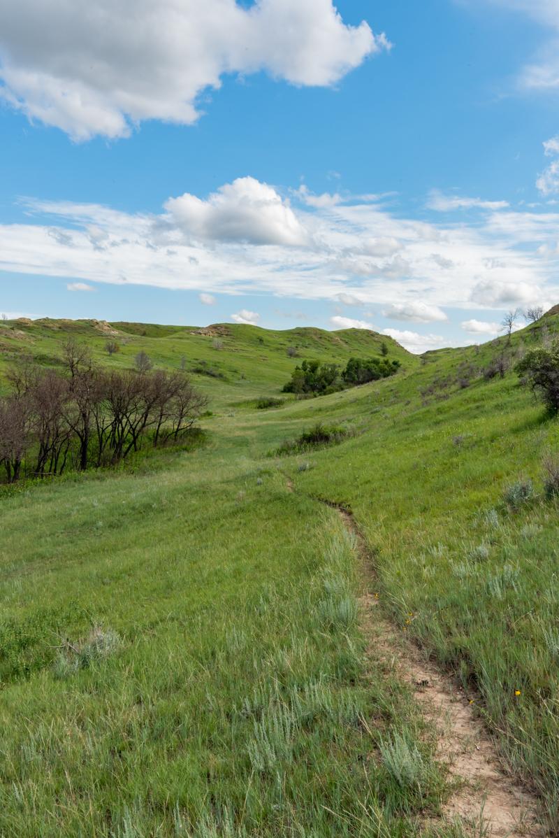 Narrow Trail Cuts Through Prarie