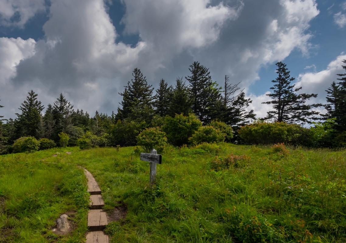 Trail through Andrews Bald