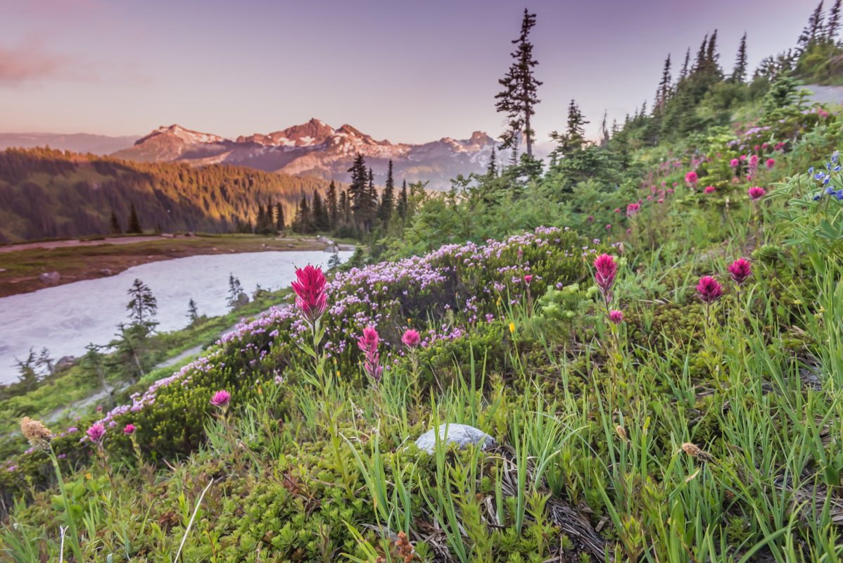 Early Sunset Over Alpine Meadow