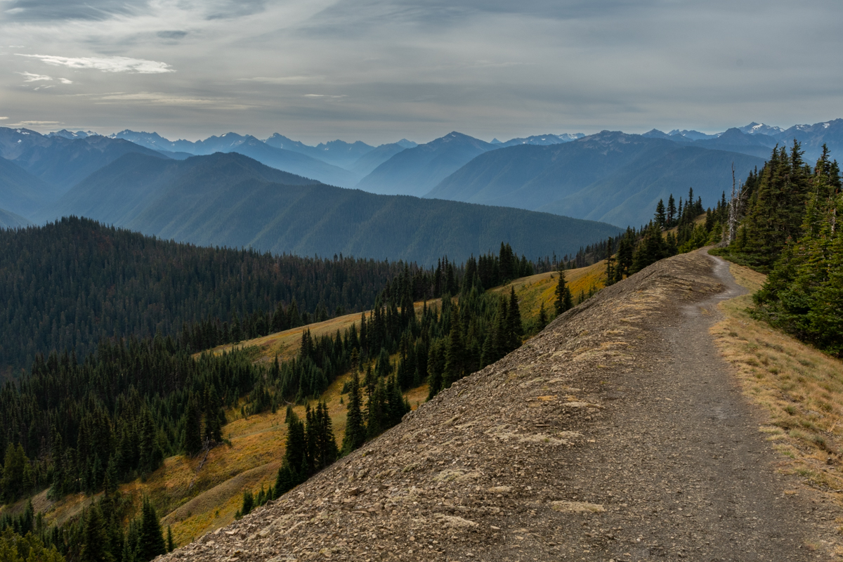 Trail Along the Ridge in Washington Wilderness