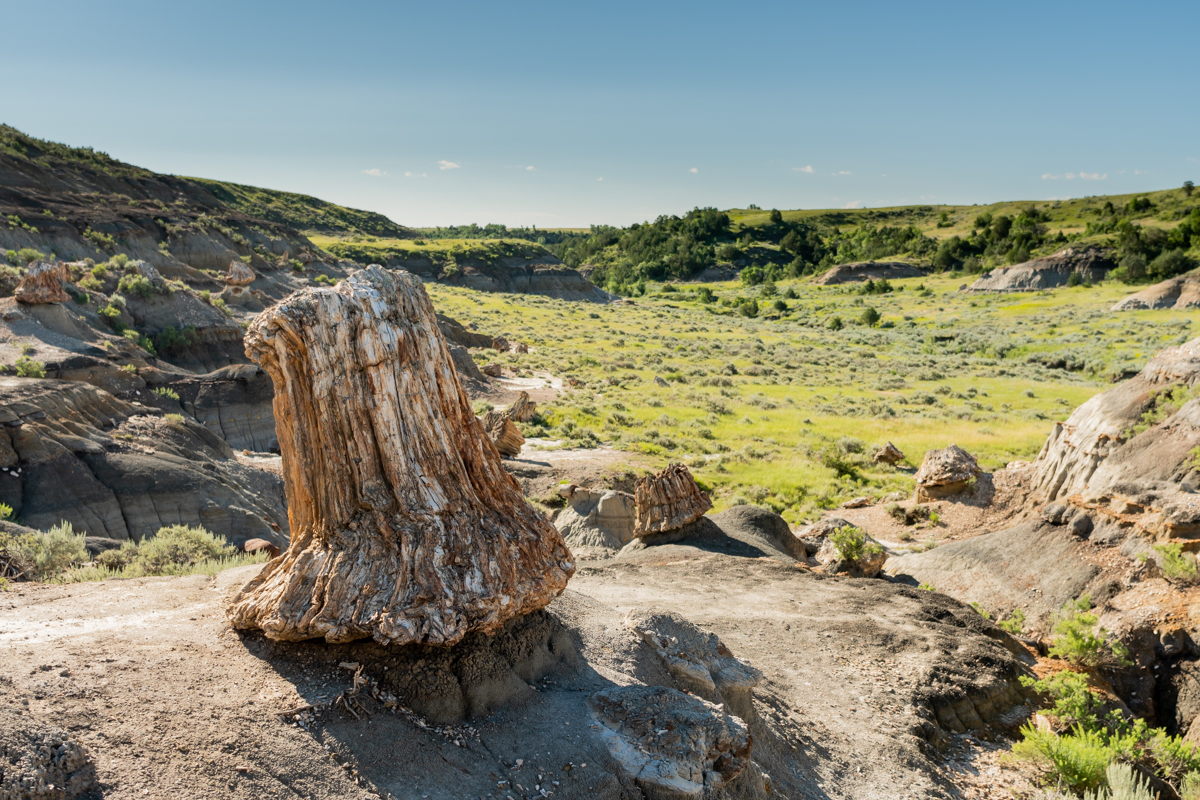 Large Petrified Stump Overlooks Valley