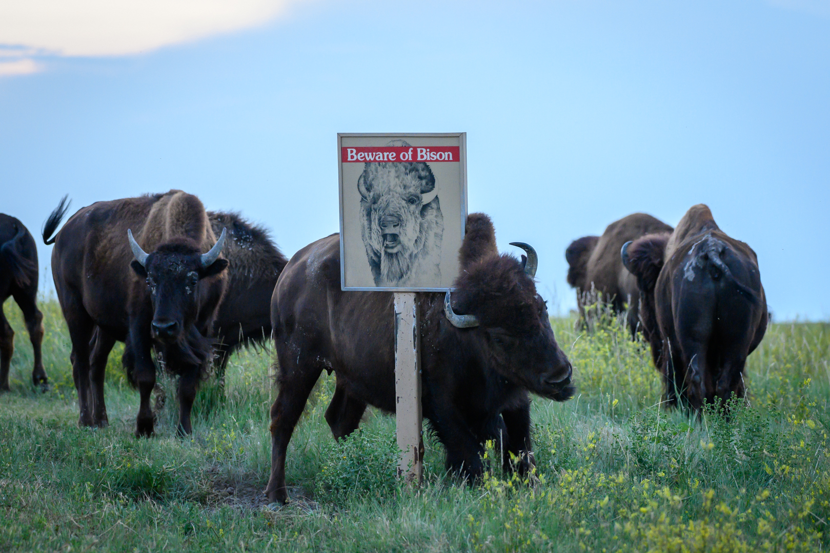 Beware of Bison Sign Shares an Ironic Message