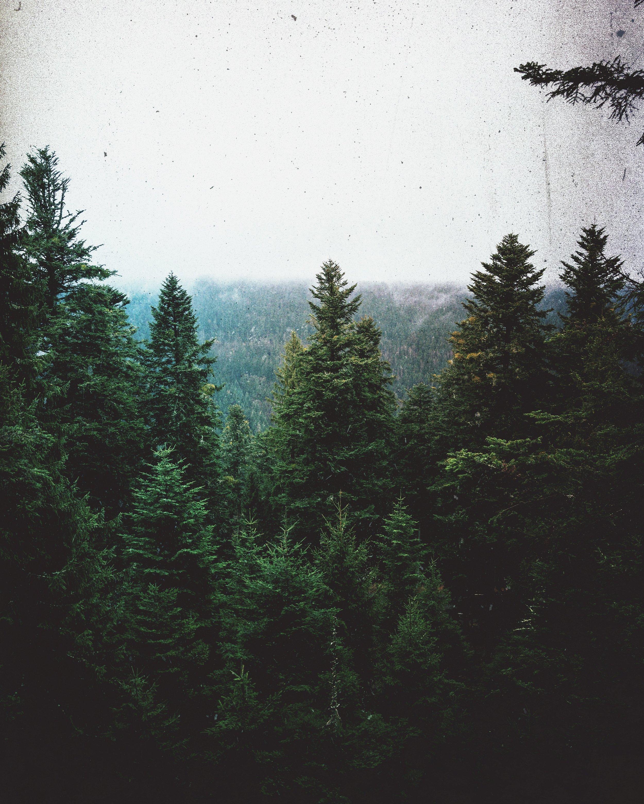 Black Forest 1 EDIT.jpeg