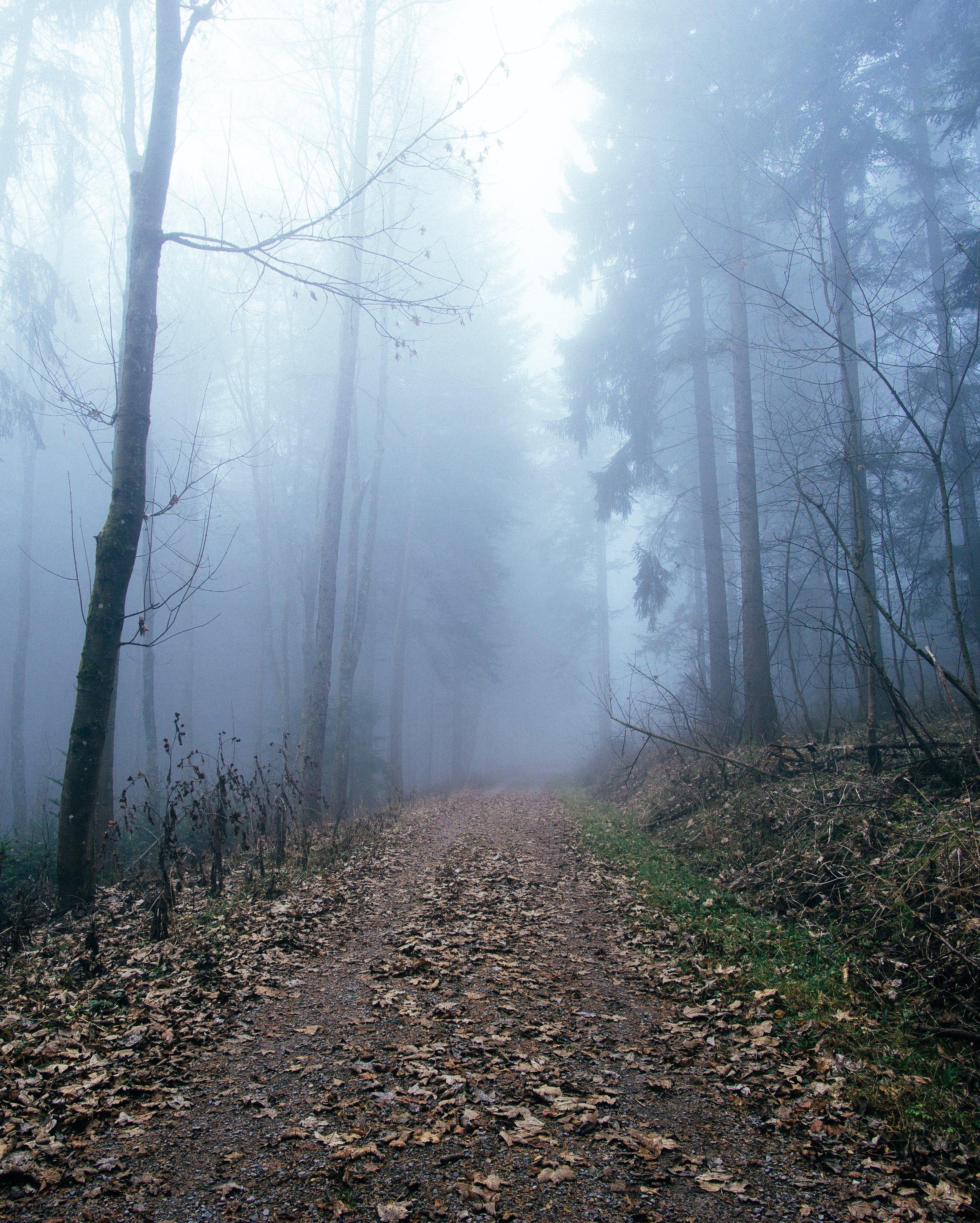 Black Forest 2.jpeg