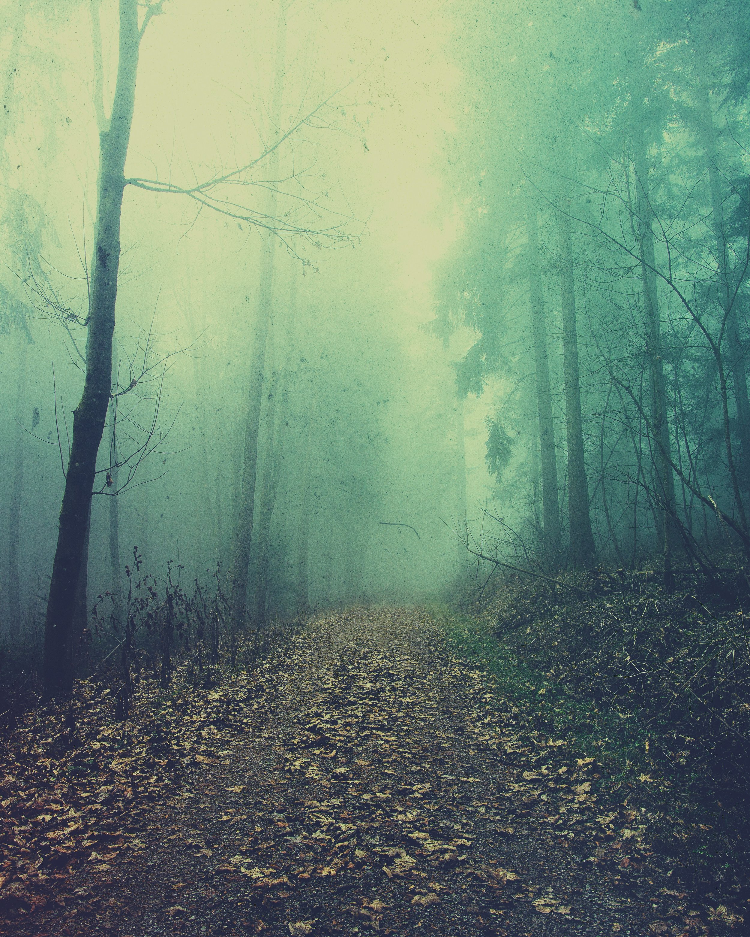 Black Forest 2 EDIT.jpeg
