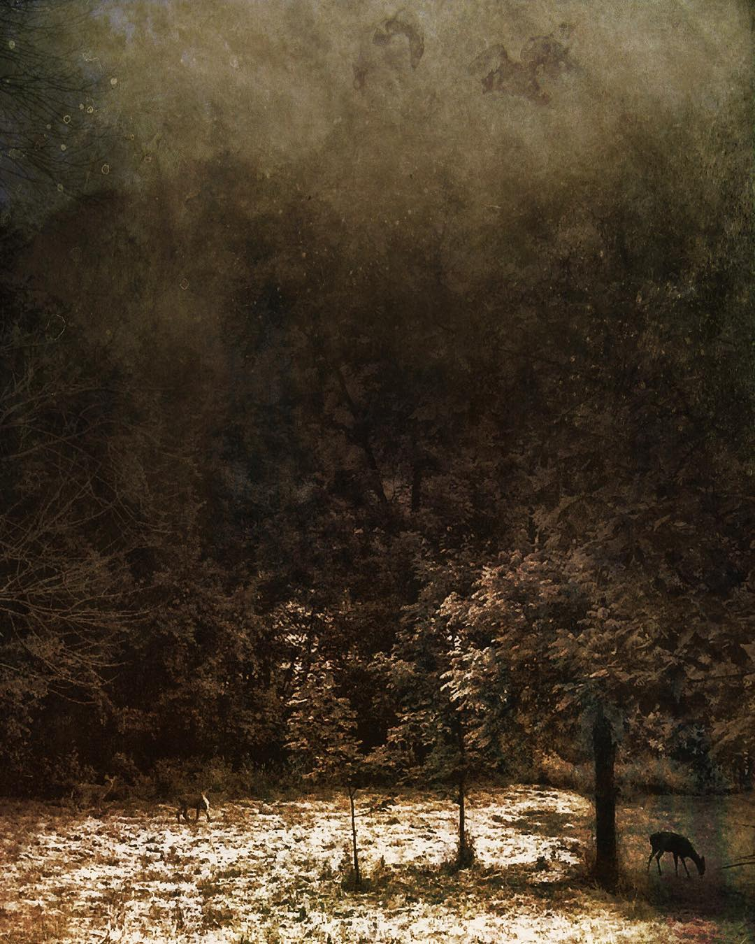 darkinlight_bnw - SLYTKMT.jpg