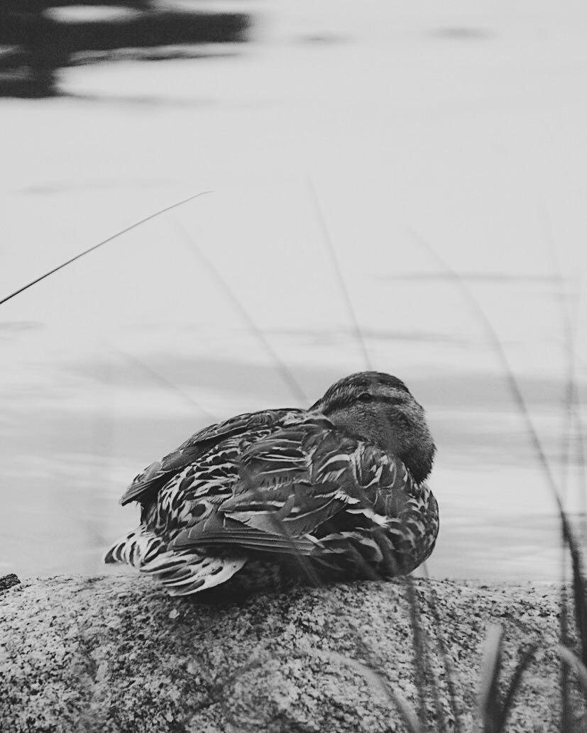 freelittleblackbird - original.JPG