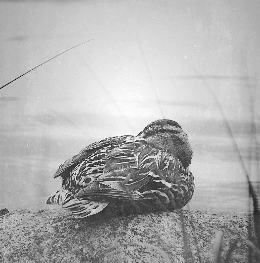 freelittleblackbird - EDGMIKY.jpg