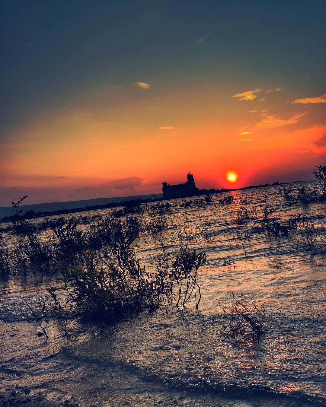 carolgong2.jpg