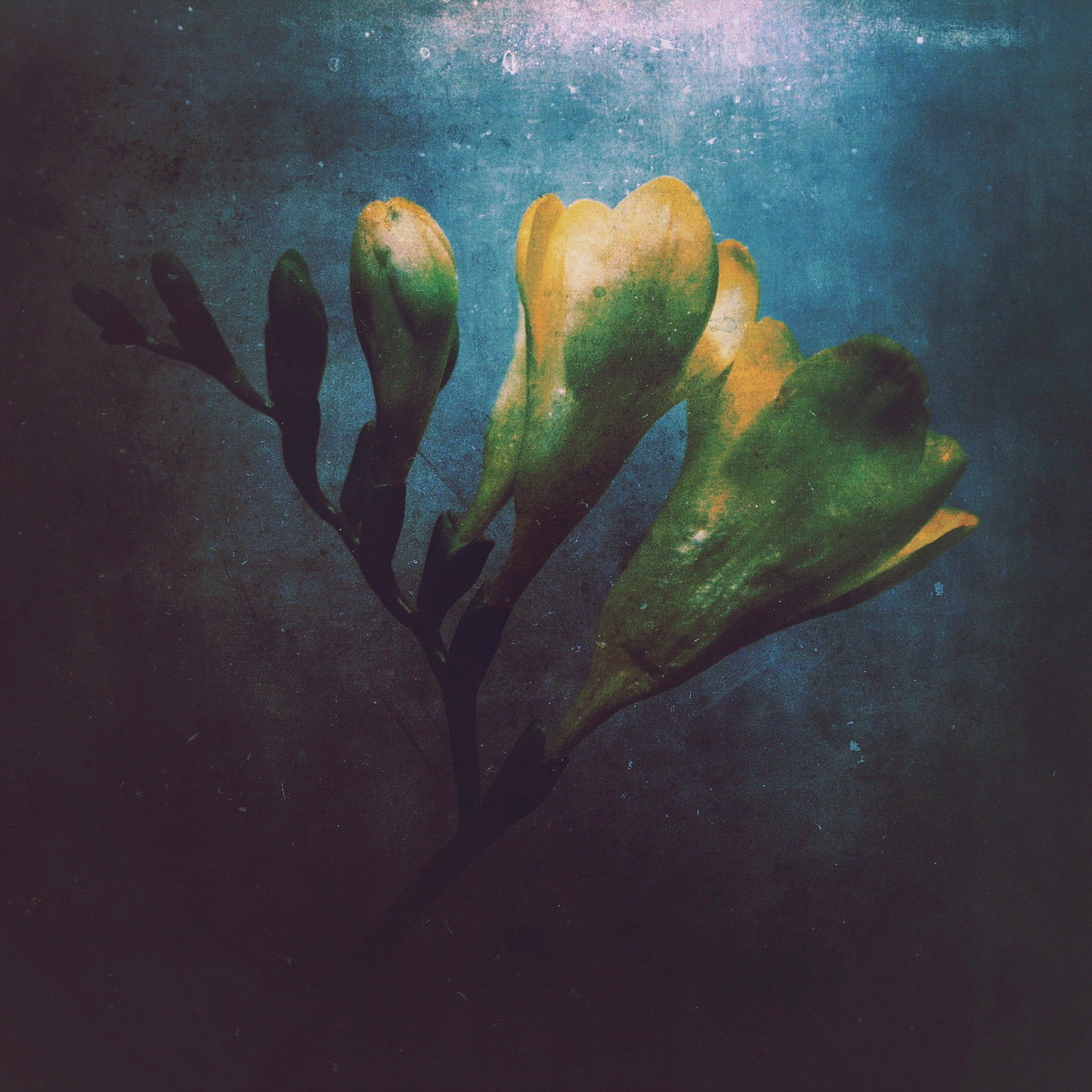 flower-IMG_7334.JPG