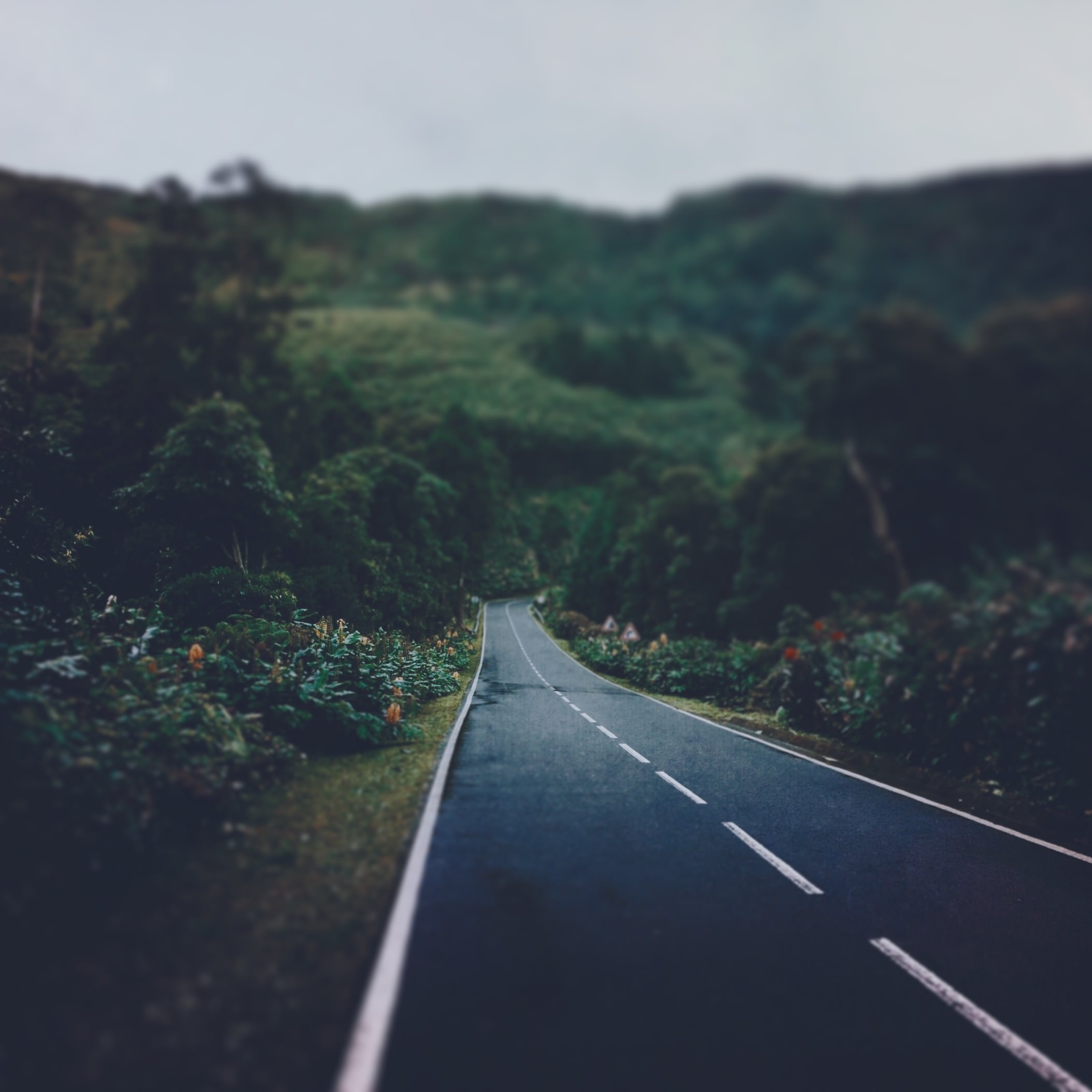 landscape-IMG_7838.JPG