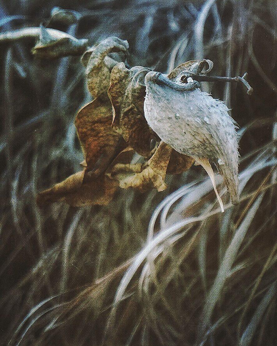 freelittleblackbird - NWSNJQQ.jpg