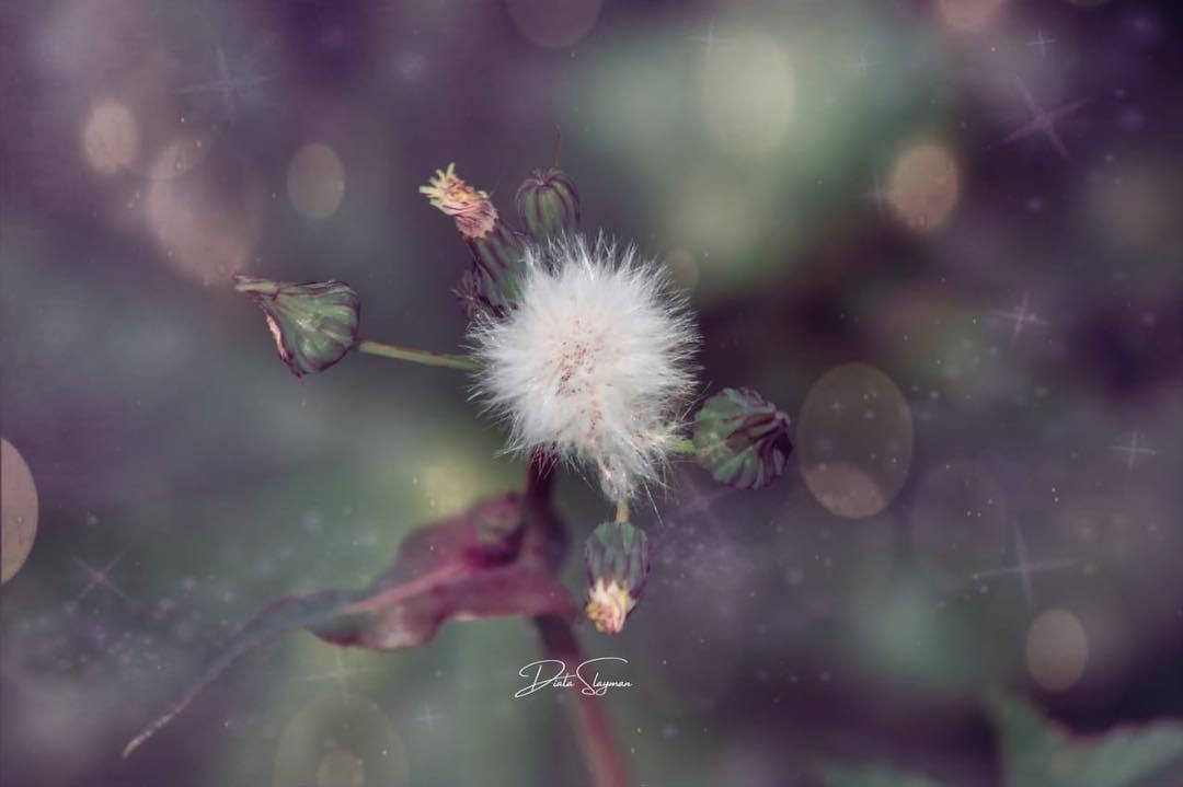 @di_flower_of_the_desert - 2.jpg