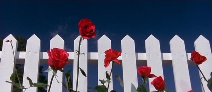 02-roses.png
