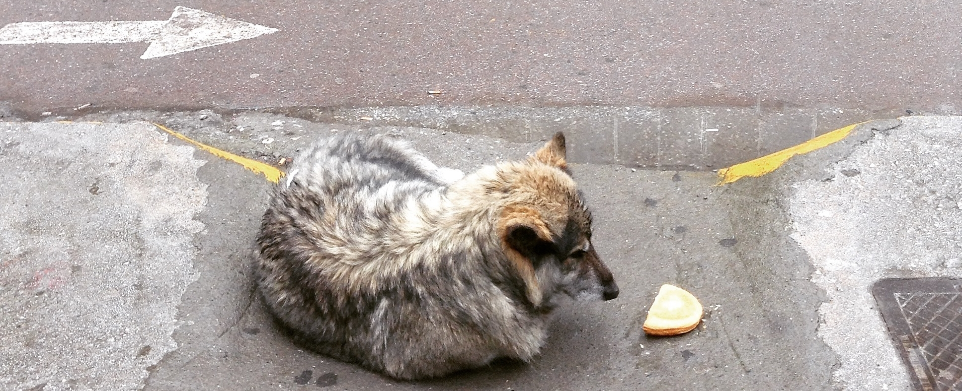 Dog with cheese pie.