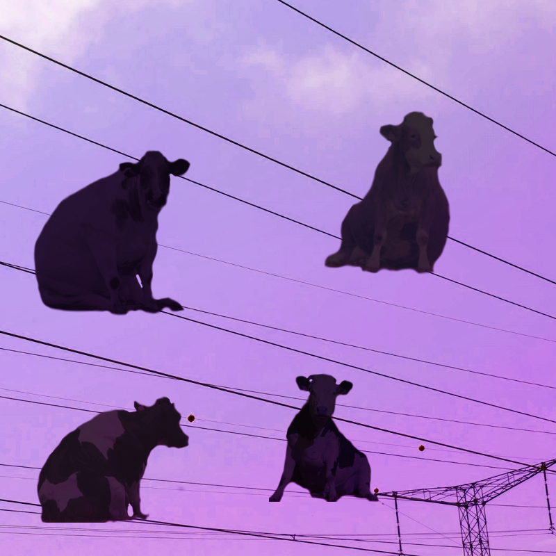 flock of cows.png