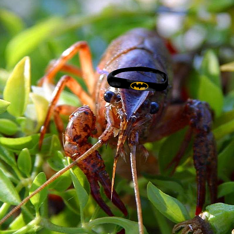 crawfish.png