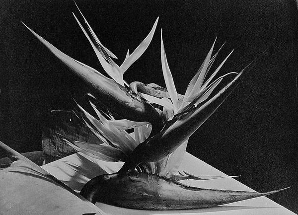Photography: Man Ray | Bird of Paradise