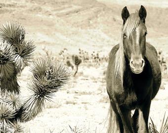 Nevada Wild Horse.jpg