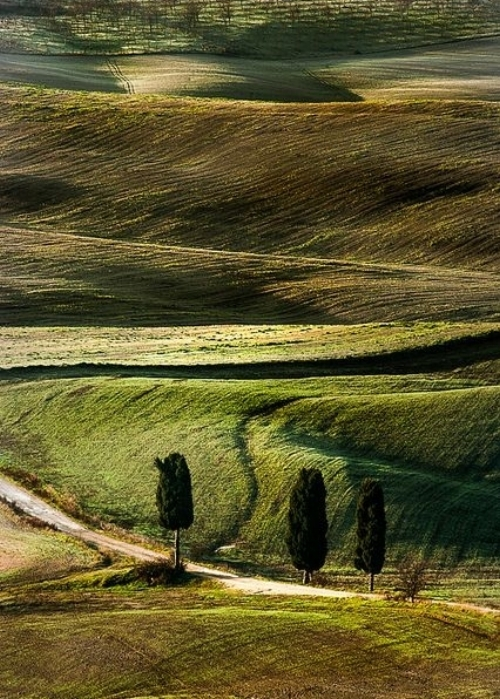 Photography: Unknown | Cypress Trees, Tuscan Roads
