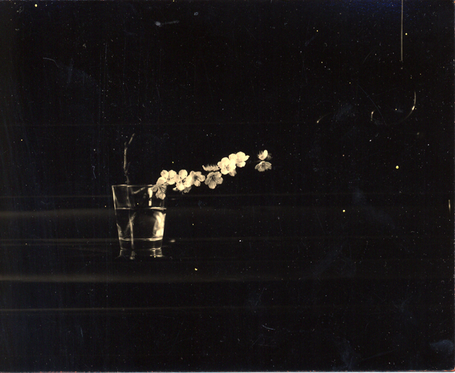 Photography: Masao Yamamoto | Flower and Glass