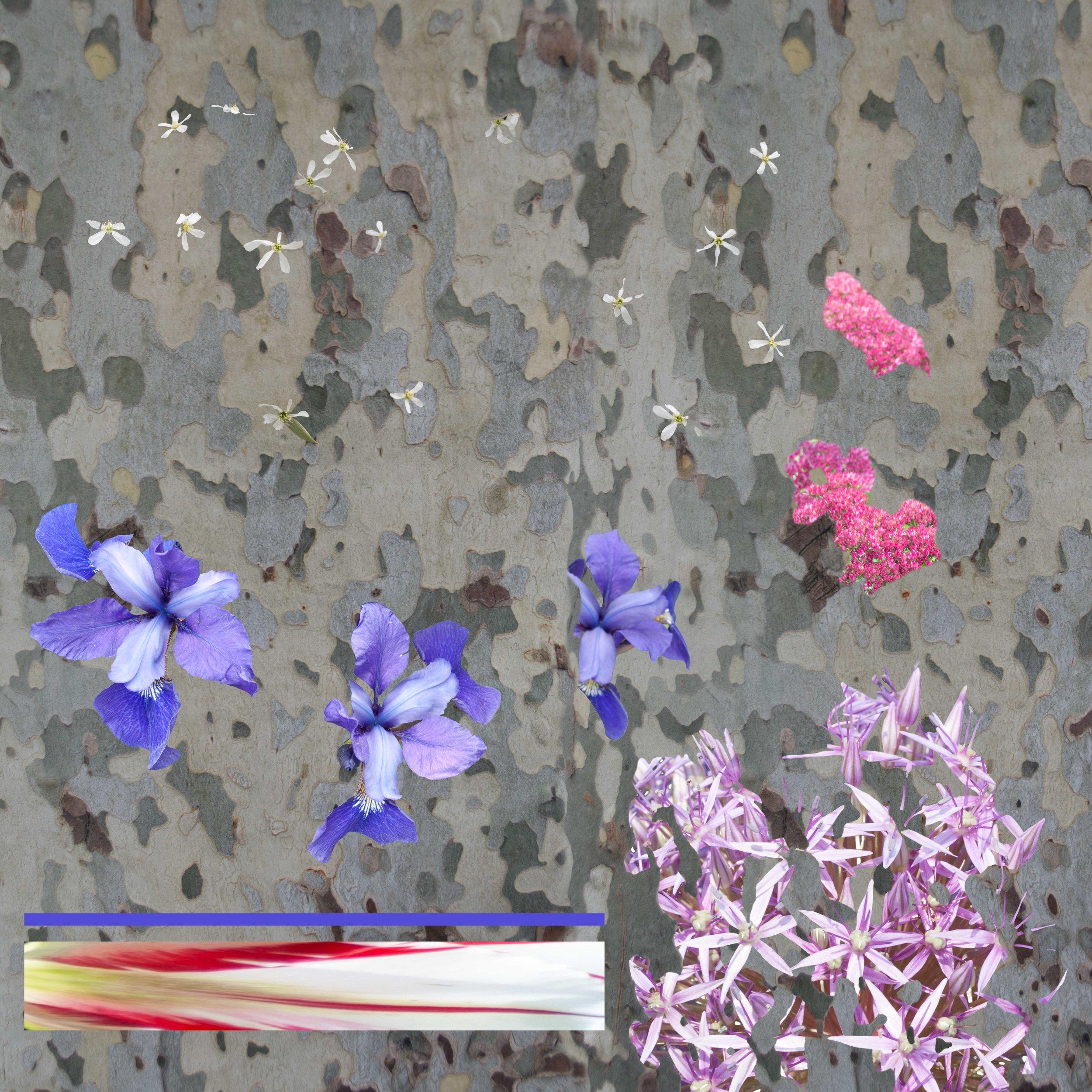 Violet Line_72 DPI.jpg
